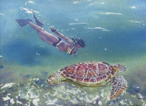swimming-with-turtles898