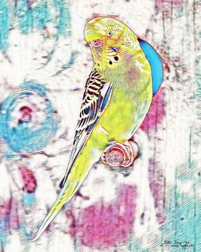 Observatory parrot of colourful delights