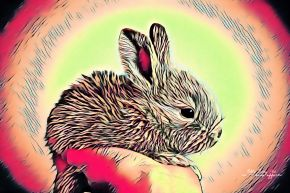 How a Rabbit glows before a carrot bite