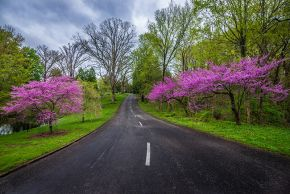 Spring-Grove-Road-etsy