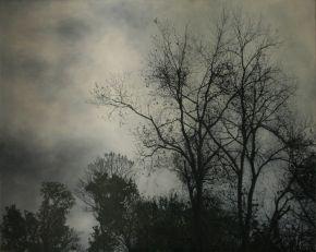 Shelterbelt #1 2011 by Angie de Latour