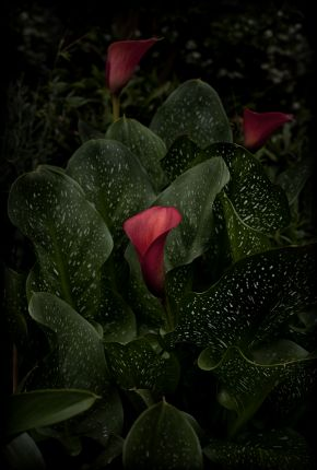 Flores Venereae #8 by Fabrice Bigot