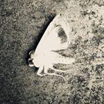 sarina_lirosi's profile picture