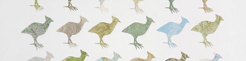 Mrs Darwin's Birds