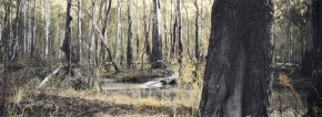 budgee-creek-i--barmah-national-park