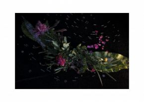 Garden Universe by Sandra Kontos