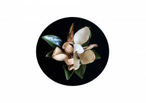 Magnolia by Sandra Kontos