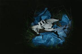 Rustler by Camilla Tadich