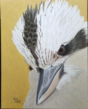 KS577 kookaburra Stare